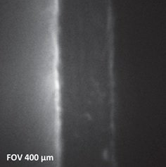 Fig. 1: X-ray beam induced secondary electron image (SXI) of cross-sectioned fuel cell membrane